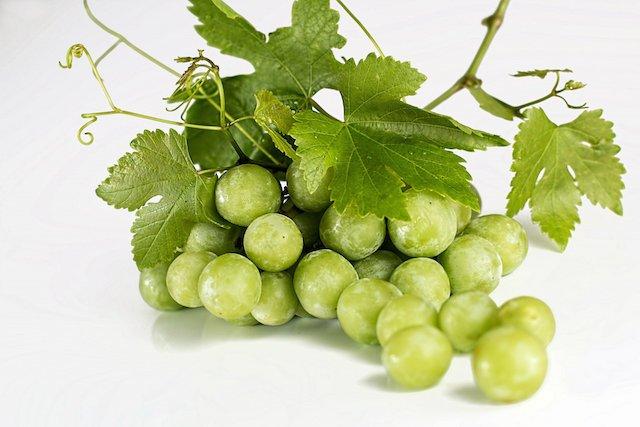 grapes-582207_1920.jpg