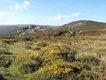 Bonehill Rocks and Bell Tor.JPG