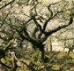 Wistman's Wood (1).jpg