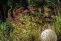 garden-64290_1920.jpg