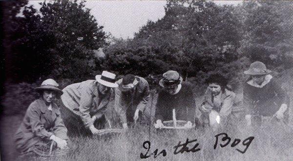 okehampton moss collectors