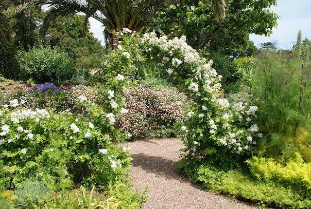 Scented garden.jpg