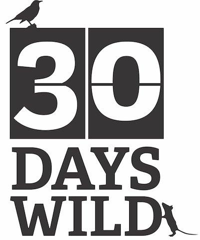 30DAYSWILD_ID1 black.JPG