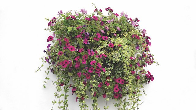 hanging-basket-1771079.jpg