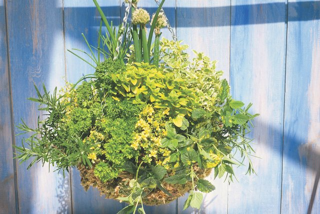 herb hanging basket.jpg