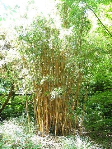 Bowdens Bamboo Garden