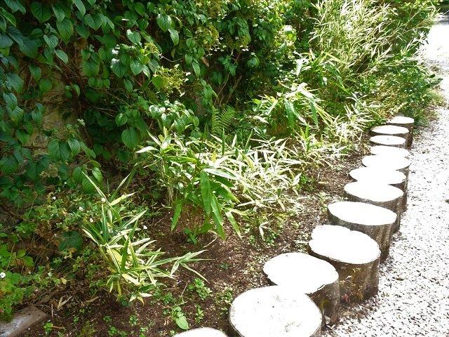 Pleioblastus bamboo