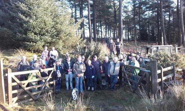 Burrator volunteers on xmas tree walk