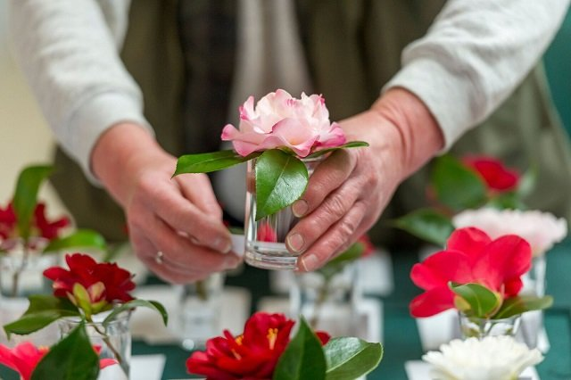 Rosemoor Spring Flower Competitions