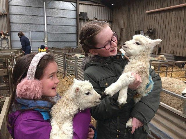 Lambing Live
