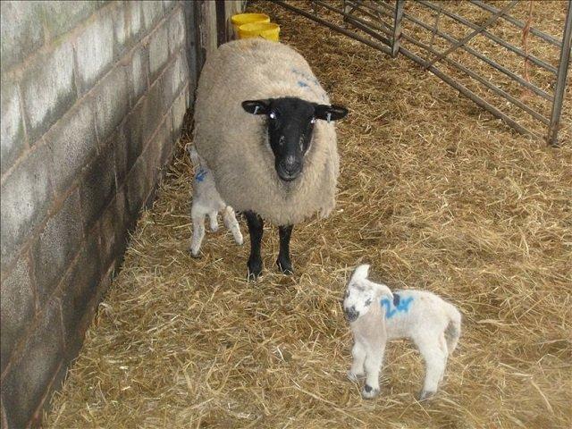 Farming Diary