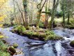 The River Teign Pilgrimage
