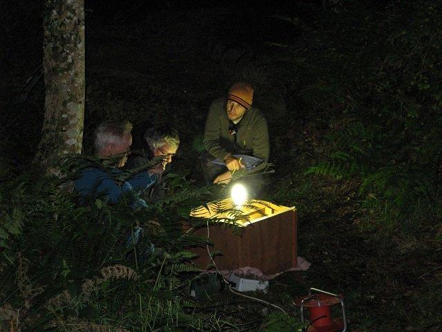 Barabastelle Bats Moths Volunteers