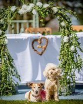 Tilly (jack russell) and George (mini poodle) doggy friendship ceremony 166.jpg224a597f-f3c4-4188-979c-8503eac51866.jpeg