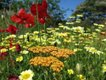 Summer Garden at The Garden House