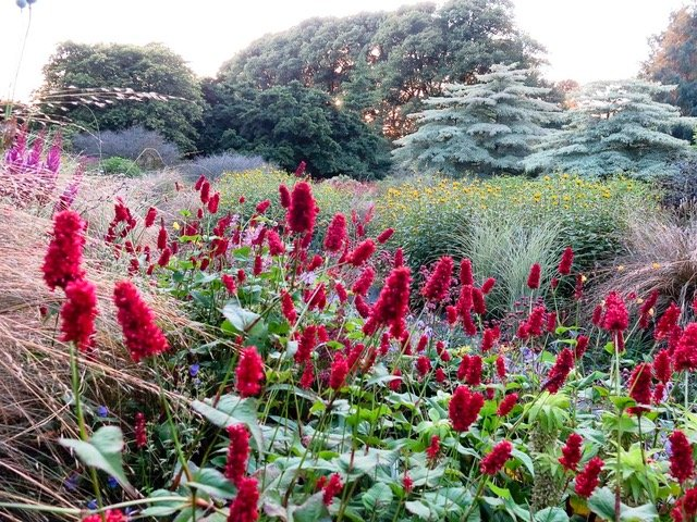 The Garden House Devon -Summer Garden Persicaria