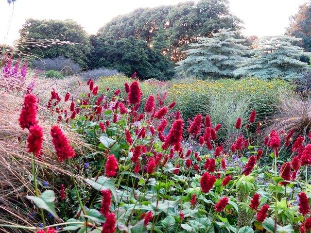 The Garden House Devon -Summer Garden Persicaria