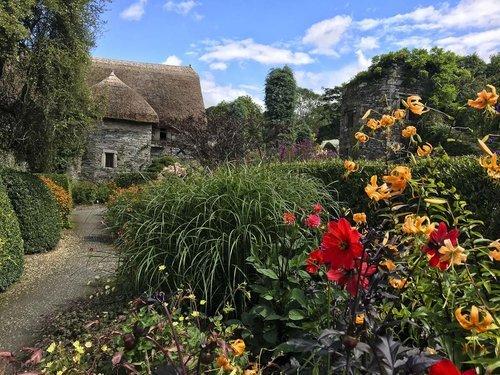 The Garden House Devon- dahlias and long borders.