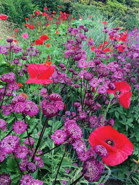 The Garden House Devon- Naturalistic