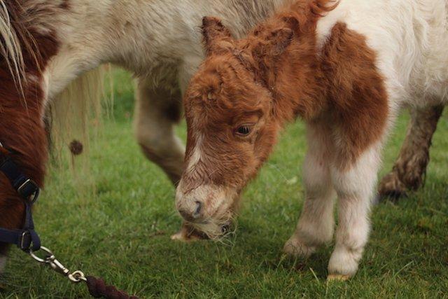New foal 2.JPG