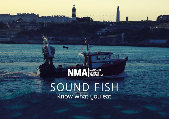 Sound Fish guide launch at the National Marine Aquarium