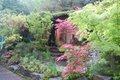 Japanese garden, Chelsea