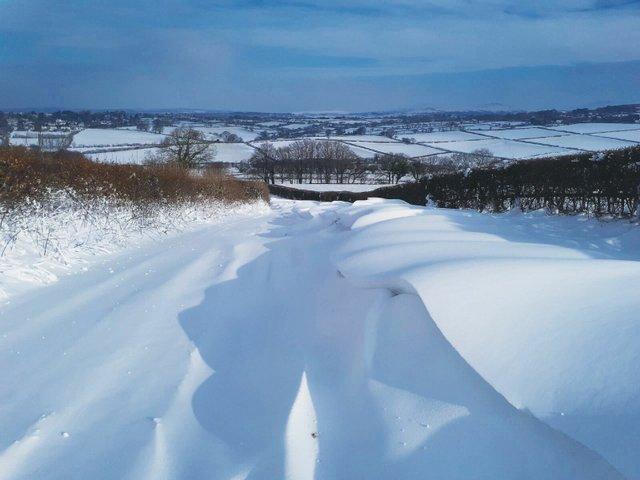 Coley snow