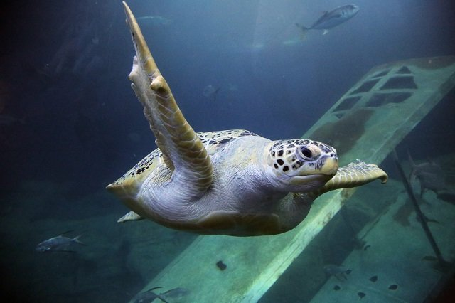 NMA - Friday the Green Turtle