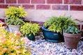 plants-in-pots-818718.jpg
