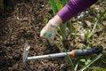 work-in-the-garden-2432111.jpg