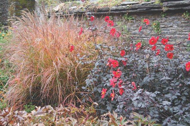 Ornamental grass and dahlias at The Garden House.JPG