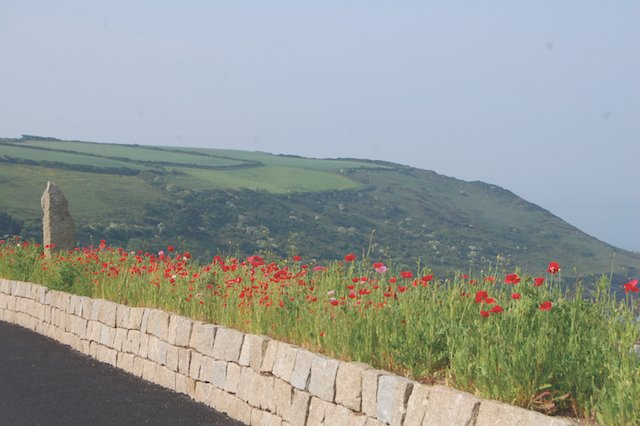 Poppies at Polhawn Fort.JPG