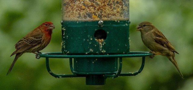 birds-feeder.jpg