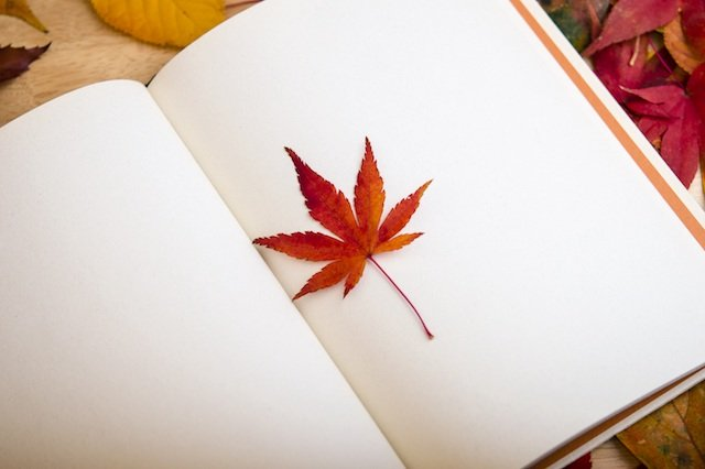 maple-leaf-diary.jpg