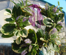 Wreath with coloured twig base.PNG