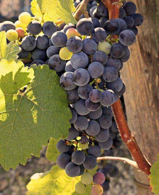 wine-3623662.jpg