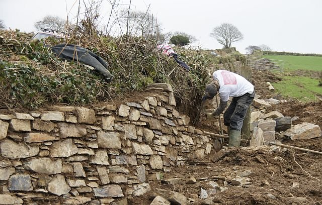 Hedge-stone-facing-repair-2-at-Deer-Park-Farm-Luckett-6-Jan-2012.jpg