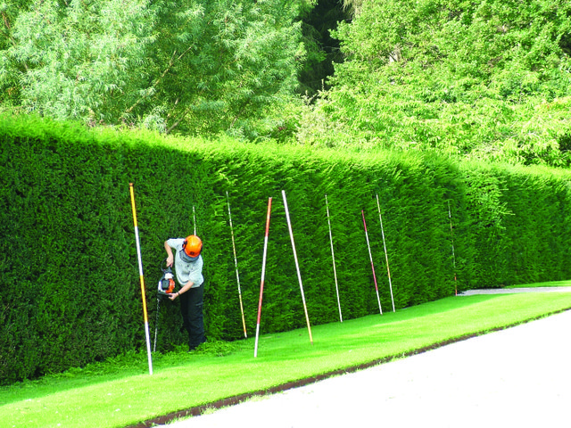 1. Cutting yew hedges credit RHS.jpg