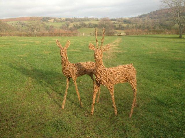little-roe-deer-3_2_orig.jpg