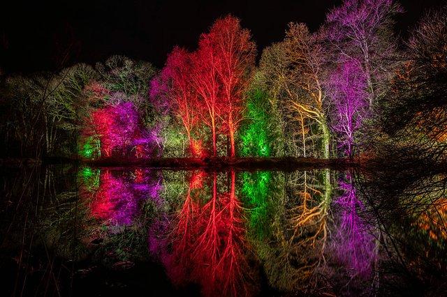 Glow-at-RHS-Garden-rosemoor.jpg