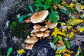 mushrooms-4611784.jpg