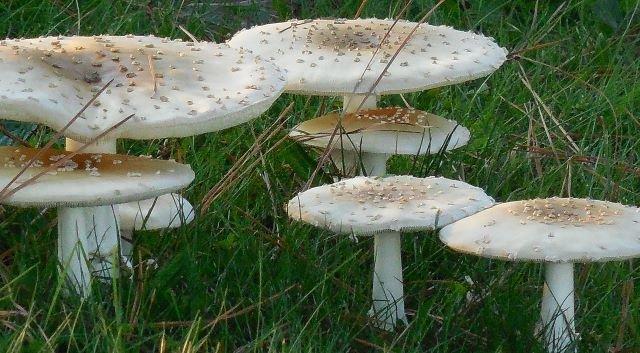 mushroom-661249.jpg