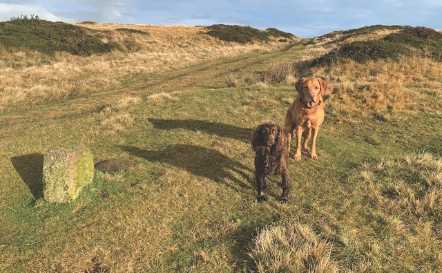 Winnie and Scooby, boubdry stone