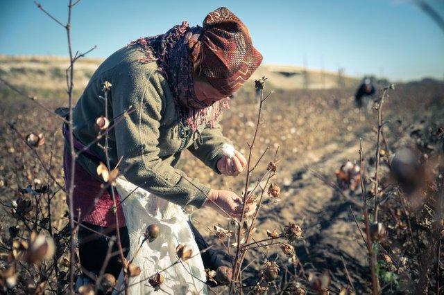 Forced labour in cotton industry, Uzbekistan