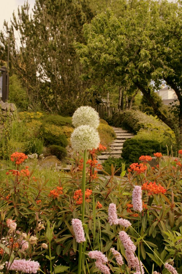 Chagford Open Gardens is back
