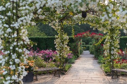 The largest rose gardens in the South West are at their peak through June & July