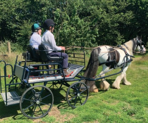 The Tavistock RDA carriage driving group provides adults and young people with the opportunity to learn the skill of carriage driving