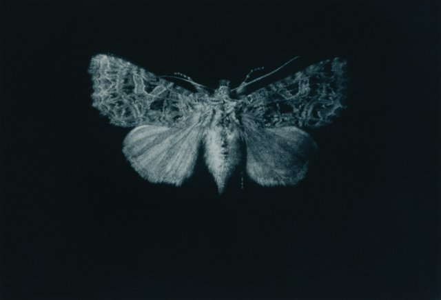 The Moth exhibition will run from July-September