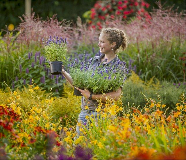 The RHS Rosemoor Garden Flower Show is returning for 2021
