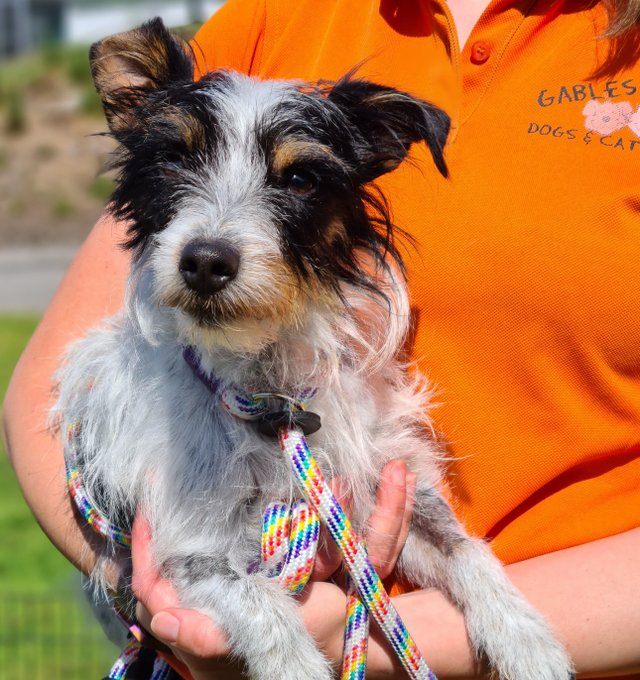 Smartie has been taken in by Gables Dogs and Cats Home